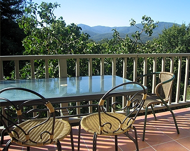 Fig tree balcony
